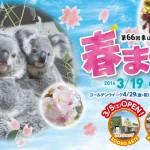 見どころ満開!名古屋近郊のオススメ花見スポット8選